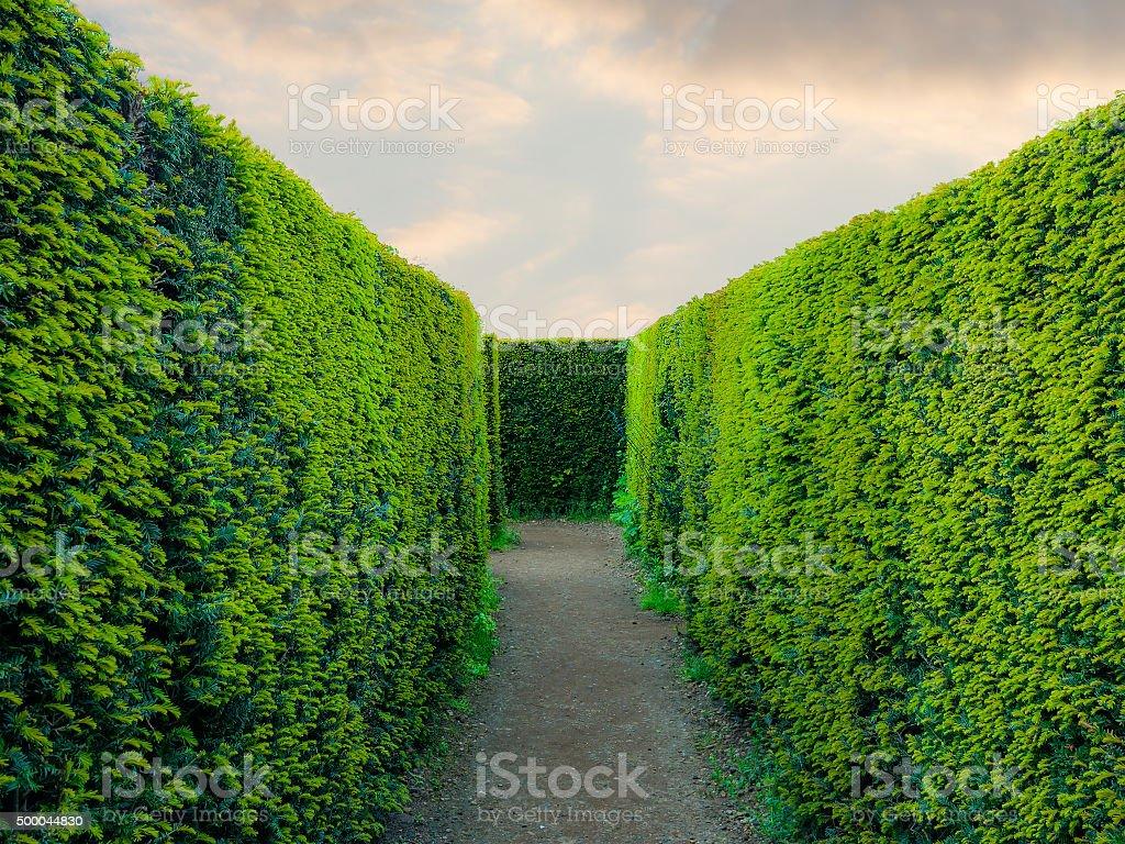 inside a maze stock photo