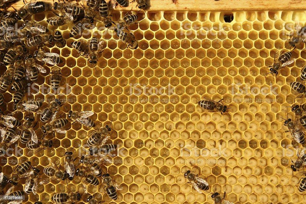 inside beehive stock photo