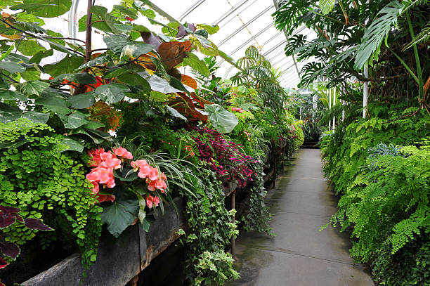 Inside Conservatory stock photo