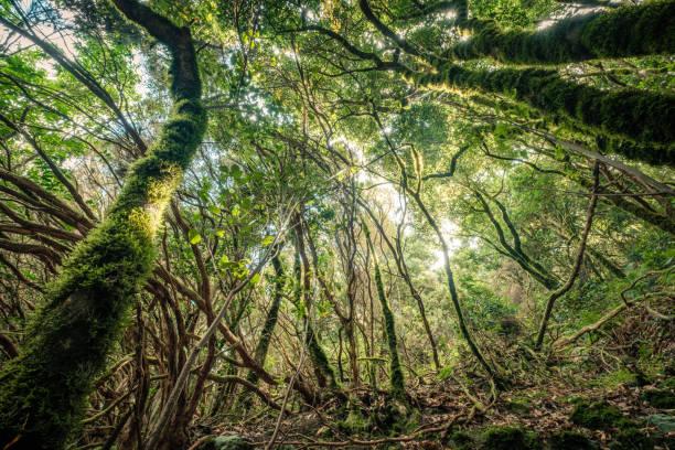 im Wald magische Atmosphäre von Anaga cloud forest – Foto
