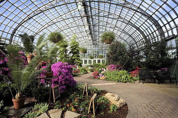 «garfield парк conservatory - оранжерея стоковые фото и изображения