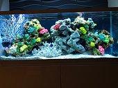 Shots of my fish tank