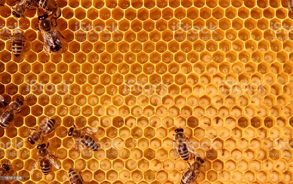 inside the bee-hive stock photo