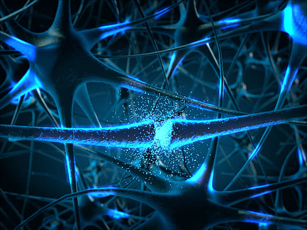 Inside the brain. Concept of neurons and nervous system. stock photo