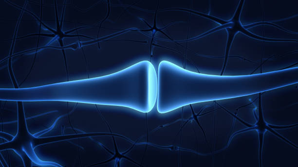 Inside the brain. Concept of neurons and nervous system.3D rendering. stock photo
