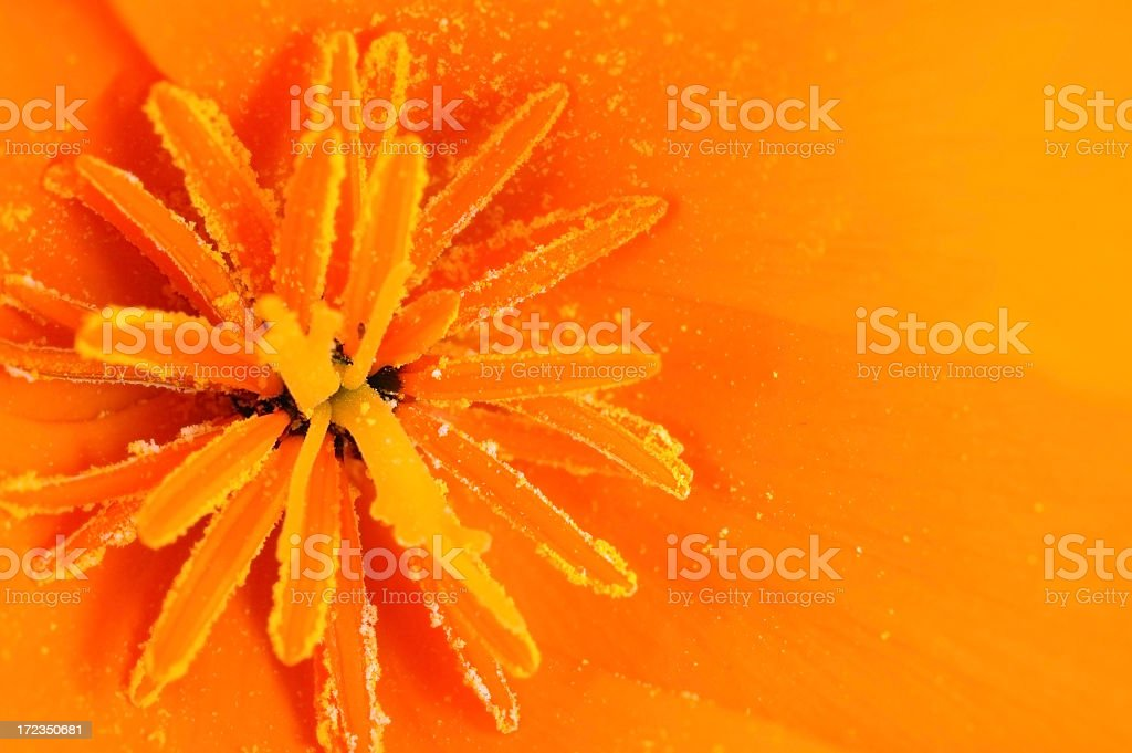 Inside the flower royalty-free stock photo