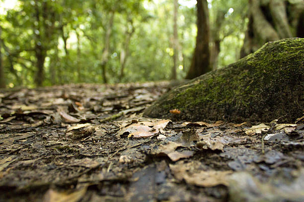 Inside the Forest stock photo
