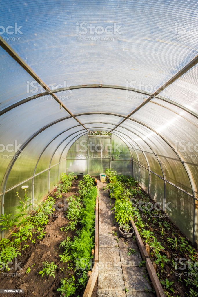 Inside the greenhouse royalty free stockfoto