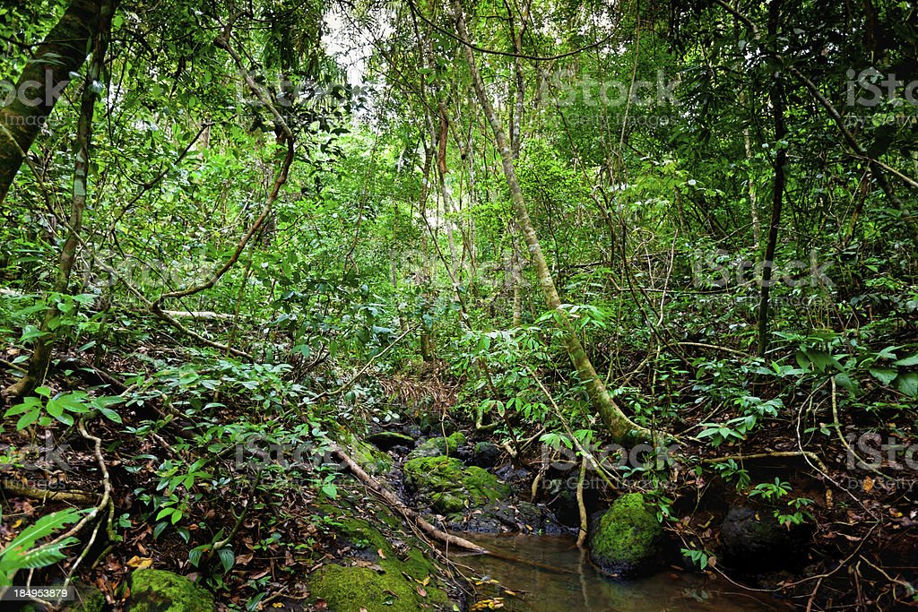 Inside the Rainforest royalty-free stock photo