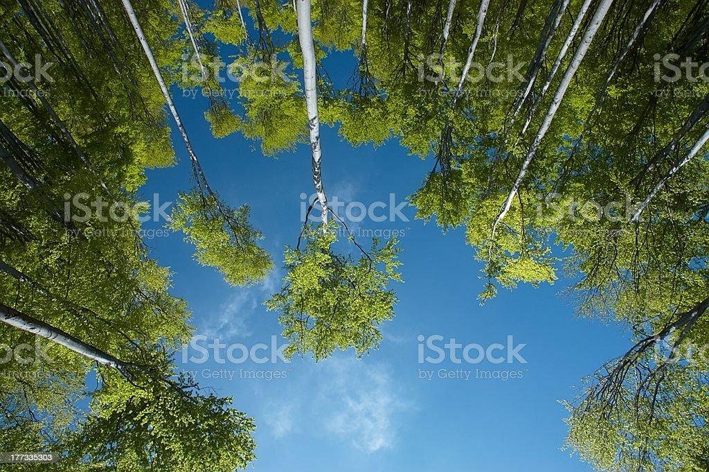 Insight into the treetops royalty-free stock photo