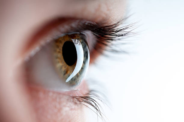 Insight A close up of an human eye iris eye stock pictures, royalty-free photos & images