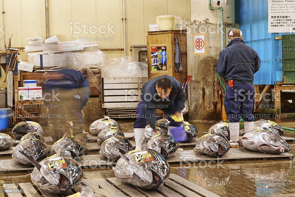 Inspecting Tuna at Tsukiji Fish Market stock photo