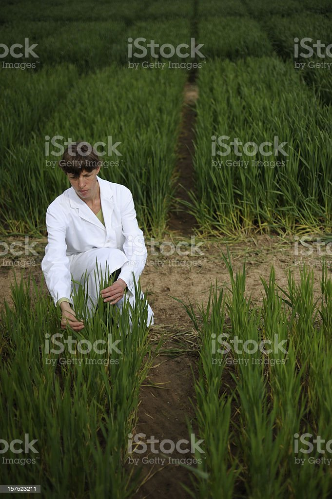 Inspection of a scientific crop experiment royalty-free stock photo