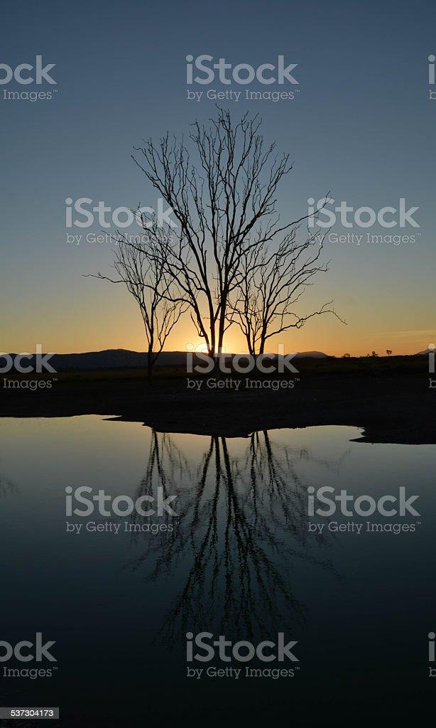 Baum Sonnenuntergang Wasser Reflexion – Foto
