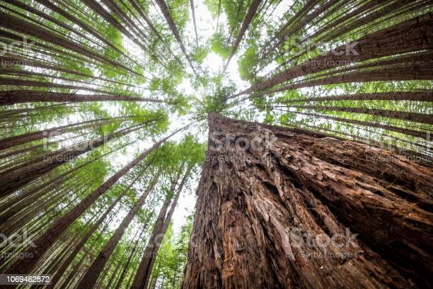 Photo of Inspirational natural landscape image of tall trees at The Redwoods Forest, Rotorua, New Zealand