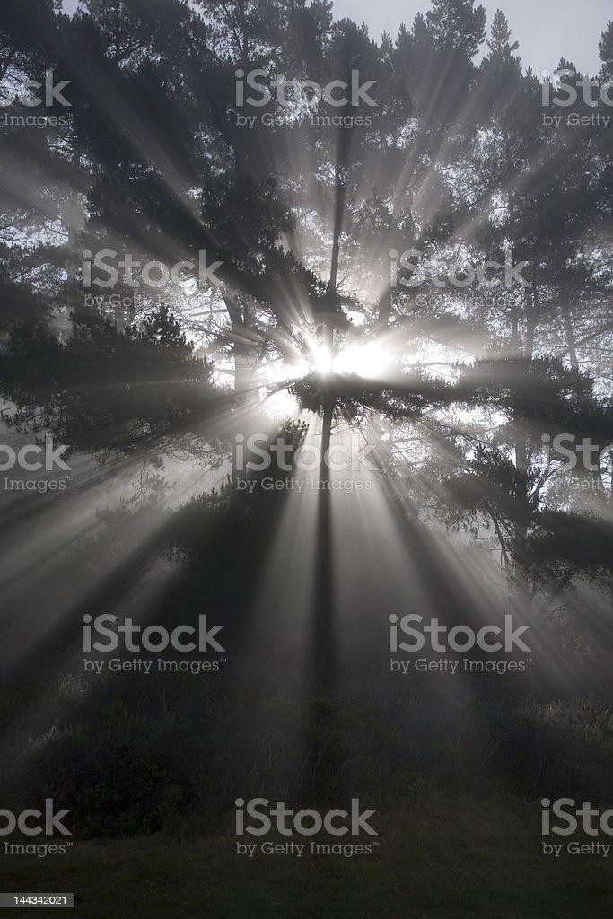 Inspiriational Rays royalty-free stock photo