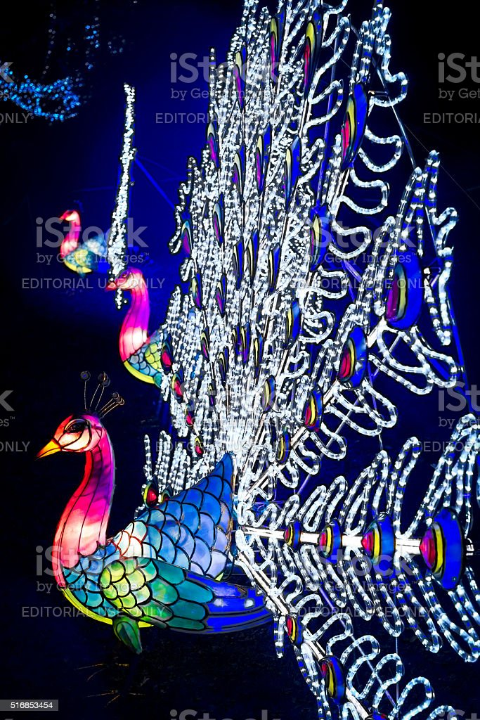 Installation of colourful peacock lanterns in Chiswick House And Gardens stock photo