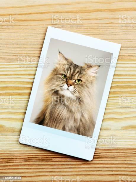 Instant camera portrait of a persian cat looking at camera picture id1133559649?b=1&k=6&m=1133559649&s=612x612&h=x51cqjuws8o frvwqcic7yhdyecjacluioe1ooi3ouq=