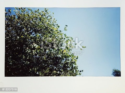 True Fujifilm Instax Wide (Polaroid technology) instant film photograph showing a green tree against a bright blue sky, July 9, 2017
