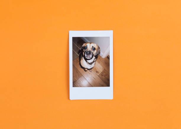 Instant photograph of cute dog on orange background picture id644025624?b=1&k=6&m=644025624&s=612x612&w=0&h=lk06o lhcpuer9u3yn5fmm1bfz je8sccpn12kgb7li=