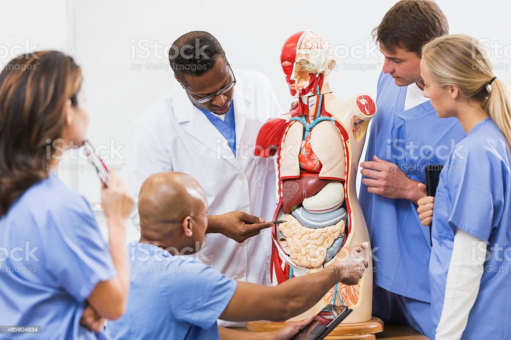 Instructor And Students In Medical School Anatomy Class Stock Photo