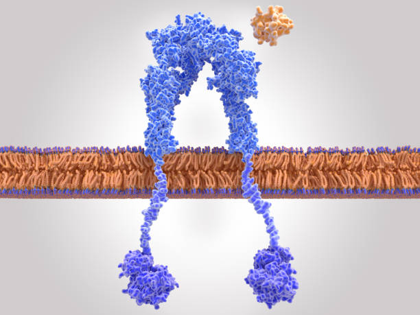 Insulin receptor inactivated, insulin is close to the binding site stock photo
