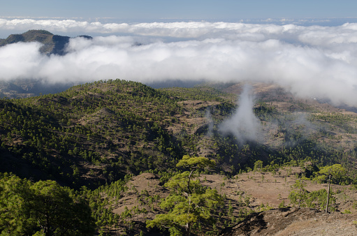 Integral Natural Reserve of Inagua and Tauro mountain in the background.