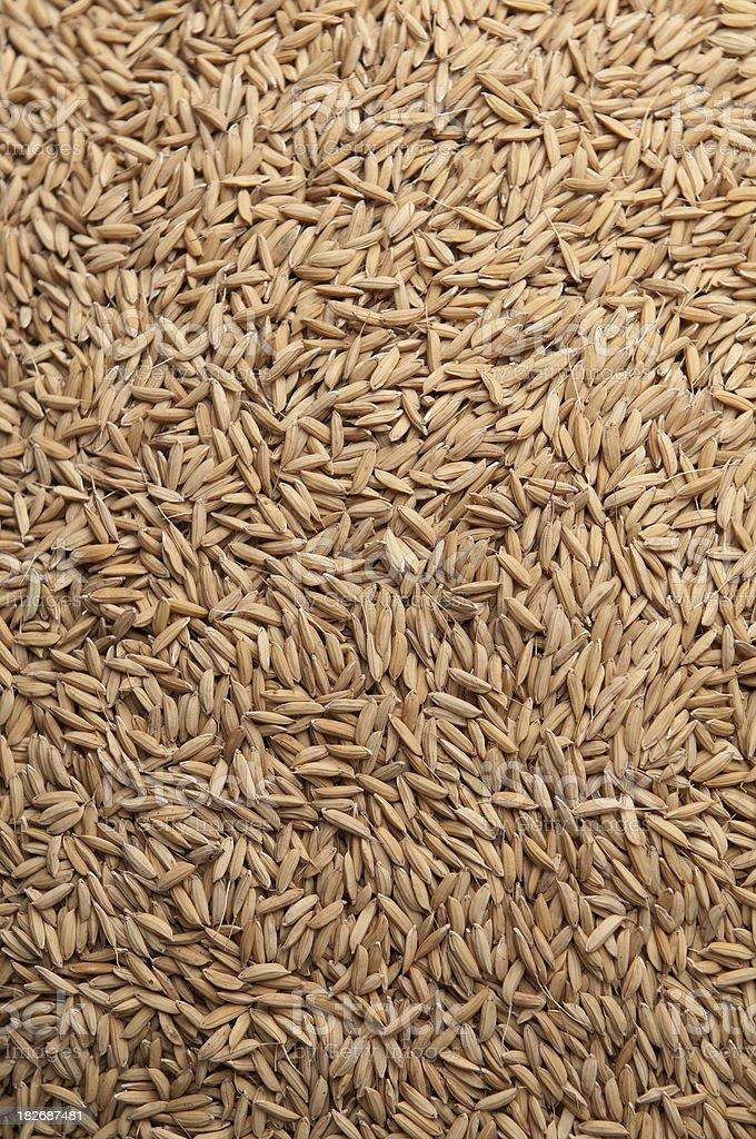 Integral paddy rice royalty-free stock photo