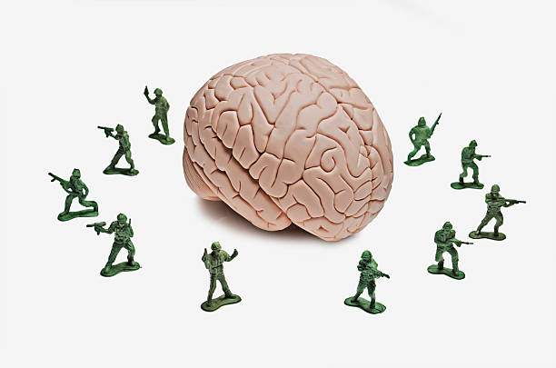 Intellectual property Toy soldiers surrounding a human brain model surrounding stock pictures, royalty-free photos & images