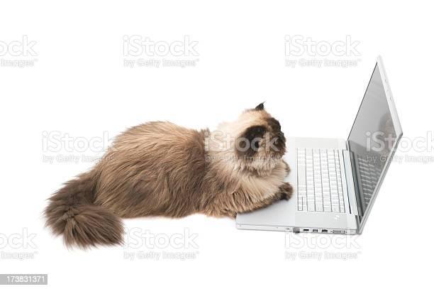 Intelligent cat picture id173831371?b=1&k=6&m=173831371&s=612x612&h=cdxi14ylwfpdnkb12ueo5ouklpsljsr7 aht 3rttze=