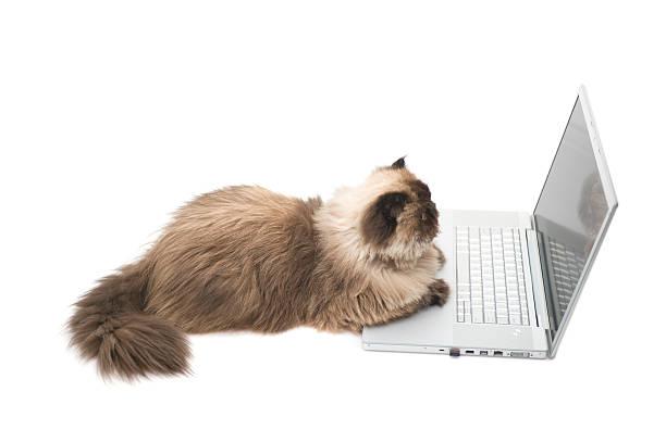 Intelligent cat picture id173831371?b=1&k=6&m=173831371&s=612x612&w=0&h=4yezxee4ouopmbol7fjulqpl rwurief4wlv4 fkmr4=