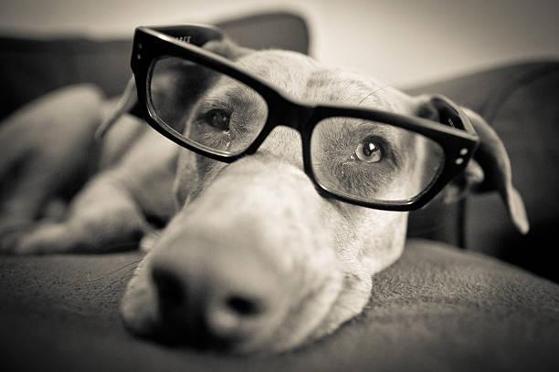 Intelligent Dog stock photo