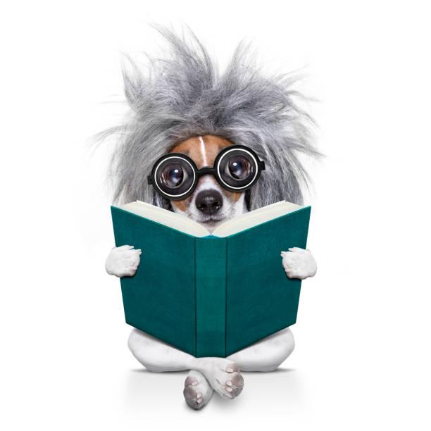 intelligent smart  dog reading a book - humor bücher stock-fotos und bilder