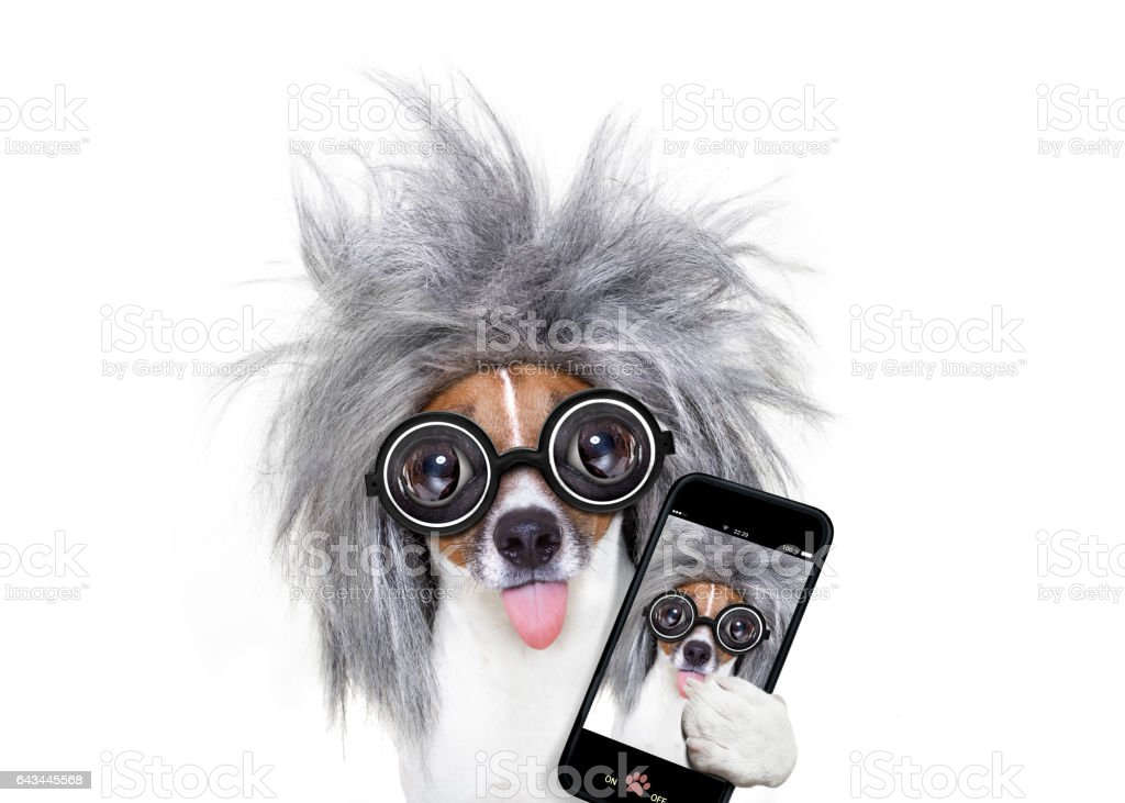intelligent smart  dog taking selfie stock photo