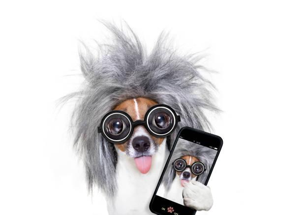 intelligente intelligenter hund nehmen selfie - coole liebessprüche stock-fotos und bilder