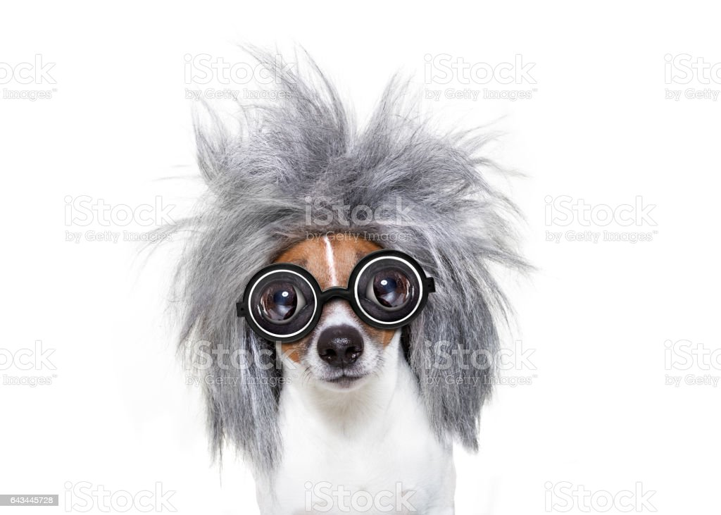 intelligent smart  dog with an idea stock photo