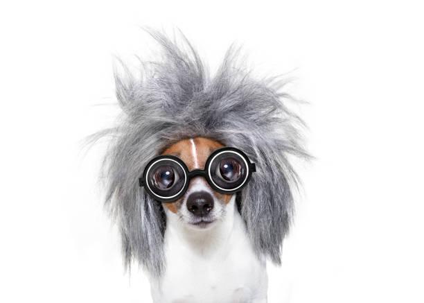 intelligent smart  dog with an idea - coole liebessprüche stock-fotos und bilder