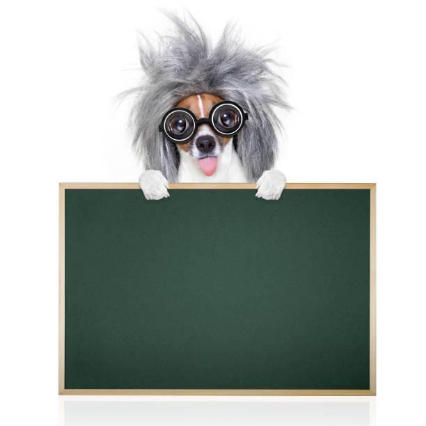 intelligent smart  dog with books - coole liebessprüche stock-fotos und bilder