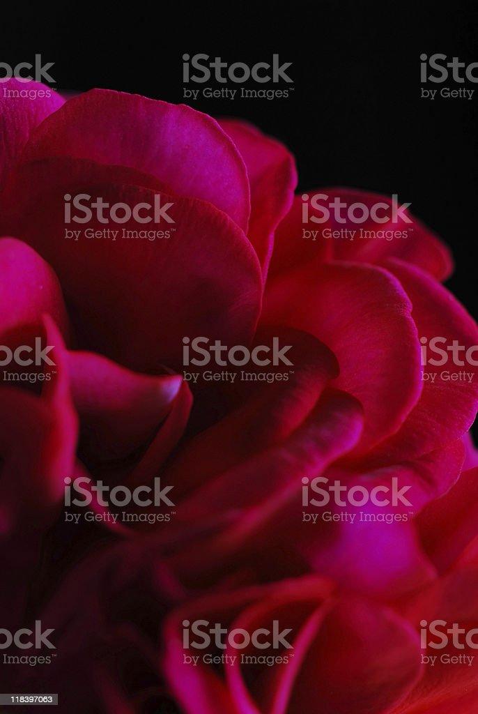 Intense colour royalty-free stock photo