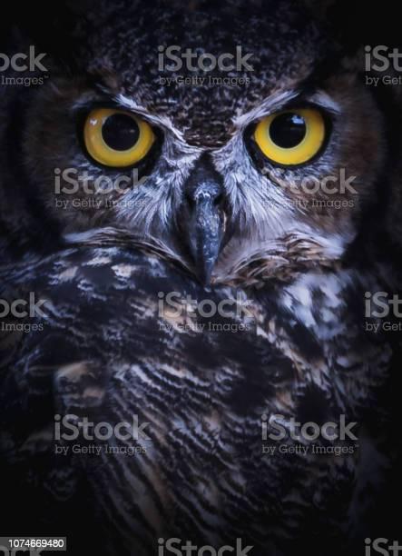 Intense eye contact from a greathorned owl picture id1074669480?b=1&k=6&m=1074669480&s=612x612&h=dsd3kazg0ptjvrdlad0thp69grsnkfl2gj8eqktvvp4=