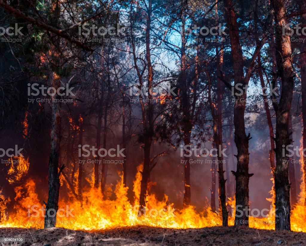 Intens vlammen van een enorme bosbrand. Vlammen oplichten in de nacht als zij door dennenbossen en salie borstel woede foto