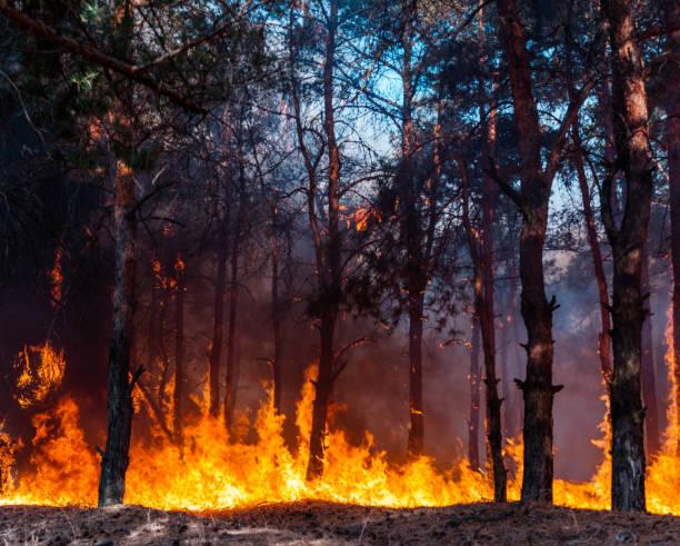 intens vlammen van een enorme bosbrand. vlammen oplichten in de nacht als zij door dennenbossen en salie borstel woede - bosbrand stockfoto's en -beelden