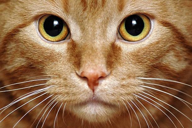 Intense Kitty stock photo