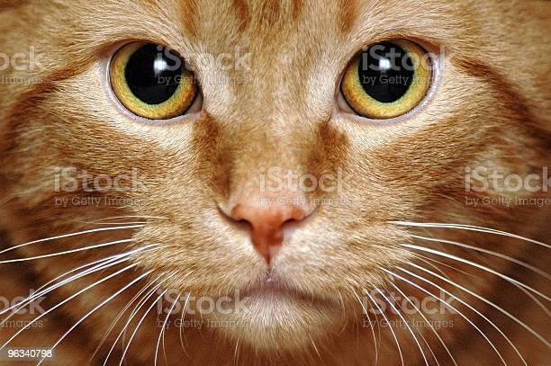 Intensywne Kitty - zdjęcia stockowe i więcej obrazów Kot domowy