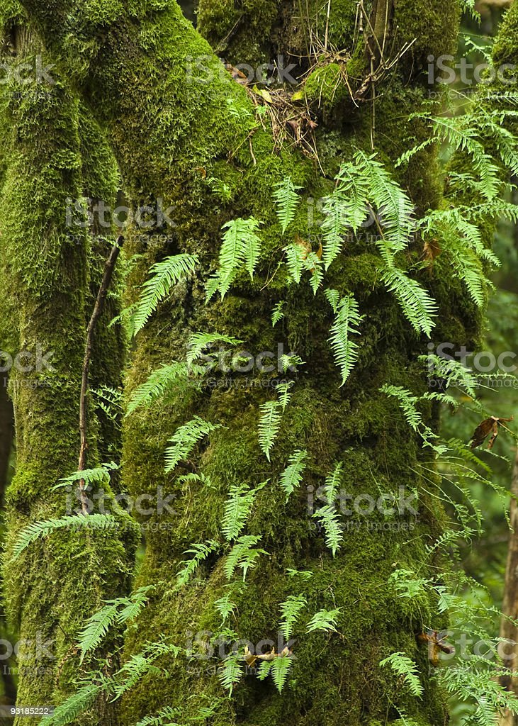 Interdependence royalty-free stock photo