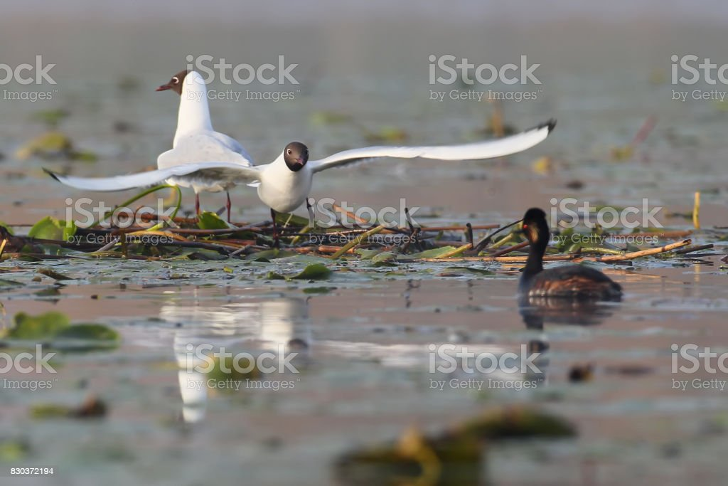Interesting and unusual moments from the life of birds. stock photo