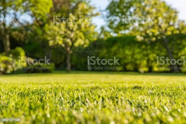 Interesting ground level view of a shallow focus image of recently picture id952107108?b=1&k=6&m=952107108&s=612x612&h=vqhcp8kwgwnmsnht6aufah4mxbtqfpclktlxxosz0tc=