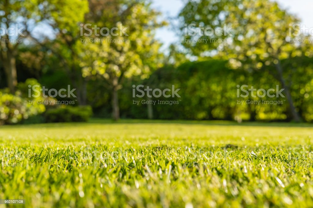 Interesting, ground level view of a shallow focus image of recently cut grass seen in a large, well-kept garden in summer. stock photo