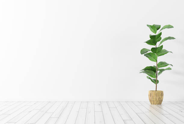 Interior background with plant 3d rendering Interior background of room with white wall, wooden floor and green plant 3d rendering houseplant stock pictures, royalty-free photos & images