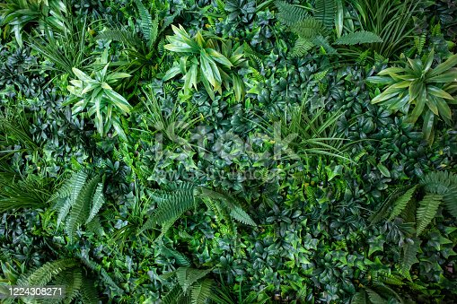 Leafy Interior Green vertical garden wall